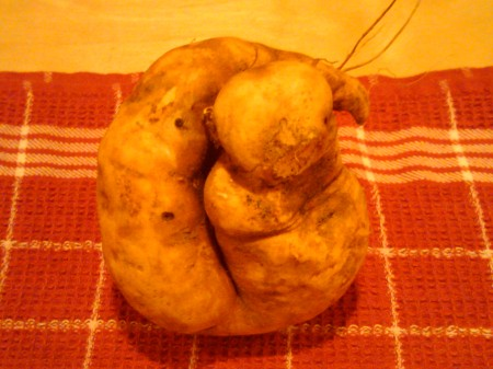 fig. 1 Sweet Potato